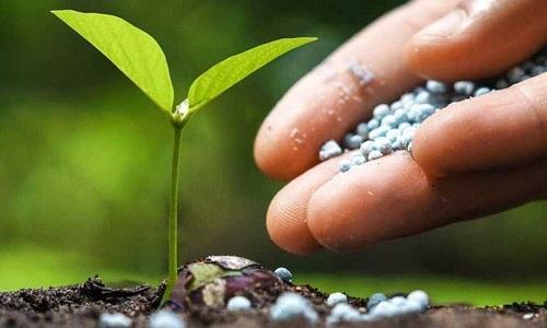 5. reanjoy Fertilizer & Soil